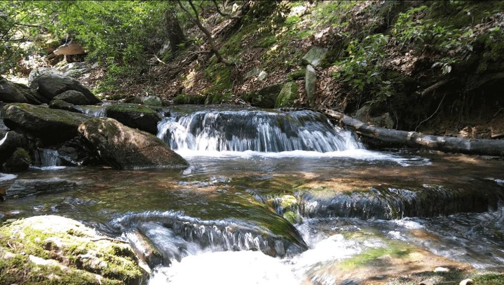 Frederick Municipal Forest